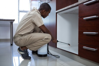Pest Control in Belgravia, Westminster, SW1. Call Now! 020 8166 9746